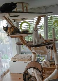 katzentr ume katzenbaum der besondere naturkratzbaum aus echtholz. Black Bedroom Furniture Sets. Home Design Ideas